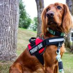 therapy dog in vest