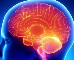 Current Science and Mechanism of Ketamine in the Brain