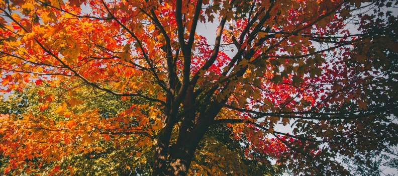 Why the change in season may be causing a change in your mood: Seasonal Affective Disorder