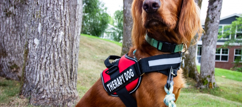 The Benefits of a Therapy Dog